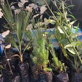 Ευχαριστούμε τη Διεύθυνση Δασών Ν. Ηρακλείου και το Αγρόκτημα της Γεωπονικής σχολής του ΤΕΙ Ηρακλείου για την προσφορά των φυτών.