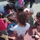 Η ενημέρωση των παιδιών για τους κανόνες της οικολογικής σκυταλοδρομίας.