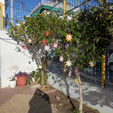 Tα δέντρα της αυλής μας στολίστηκαν για τα Χριστούγεννα με μηνύματα οικολογικά.